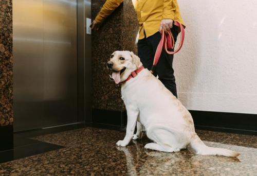 Após casos de ameaças contra cães, fique atento aos direitos do pet no condomínio